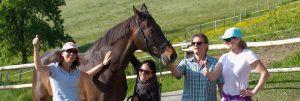nachhaltige Lösungen-pferdegestütztes-Coaching