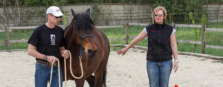Sind Pferde geeignete Coaches oder TrainerInnen?